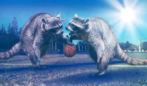 Jornades de bàsquet